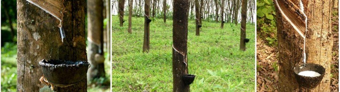 A munkahelyi egészség és biztonság fejlesztése a gumiipari ágazatban